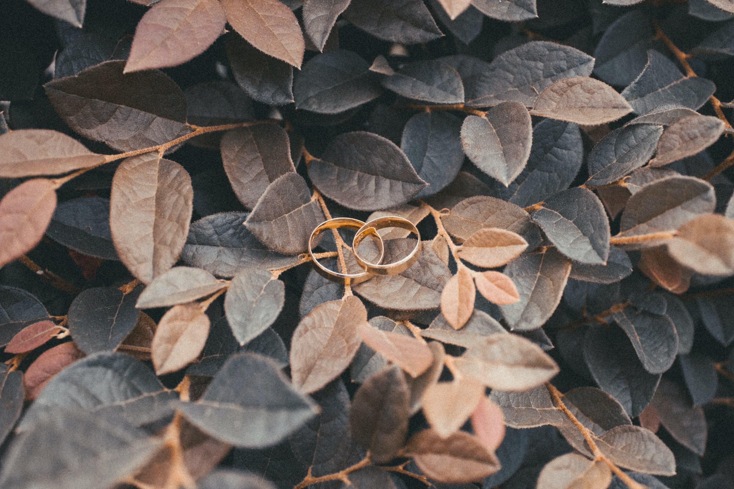 two gold rings on brown leaf