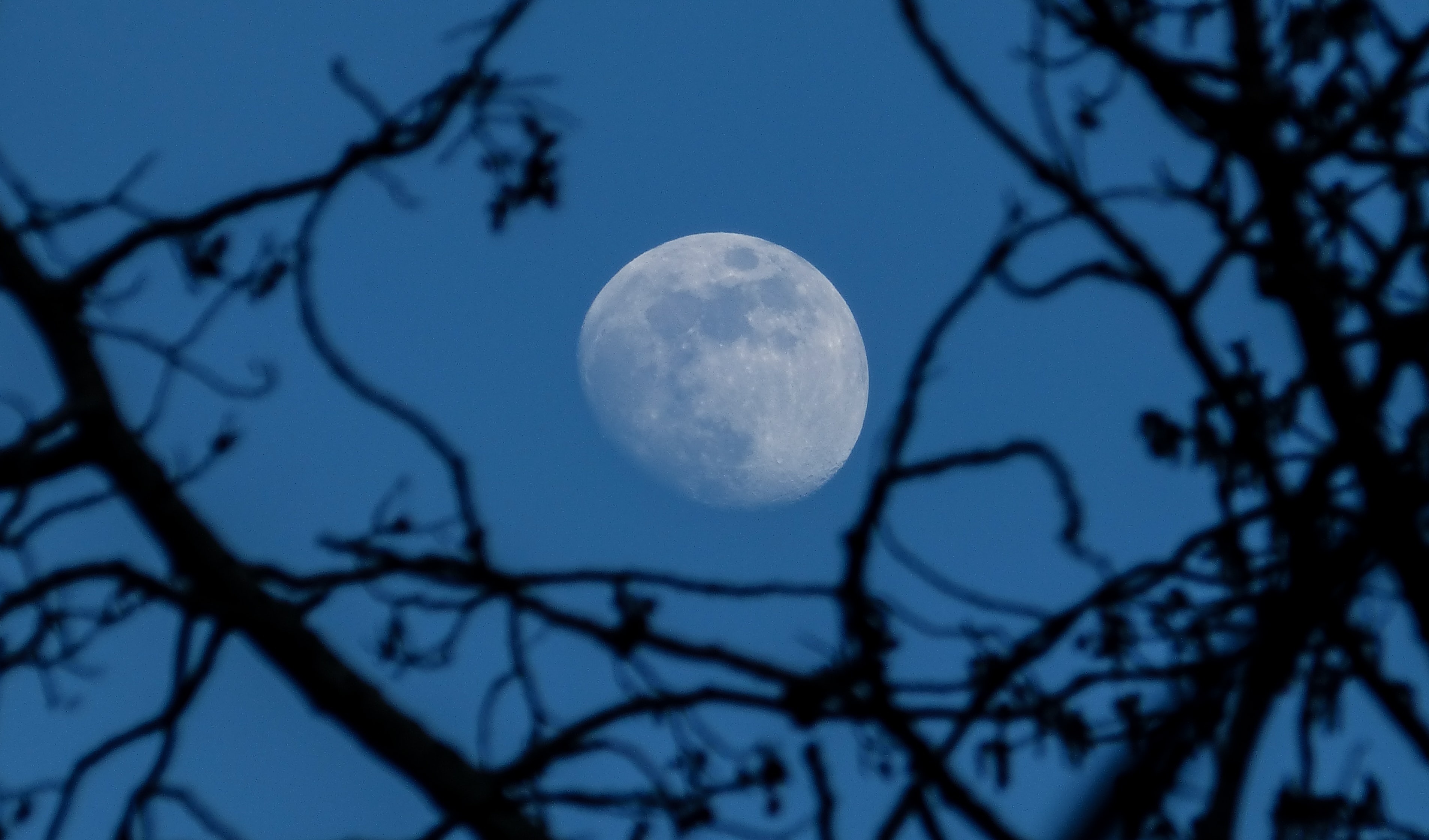 waxing gibbous moon seen through withered trees