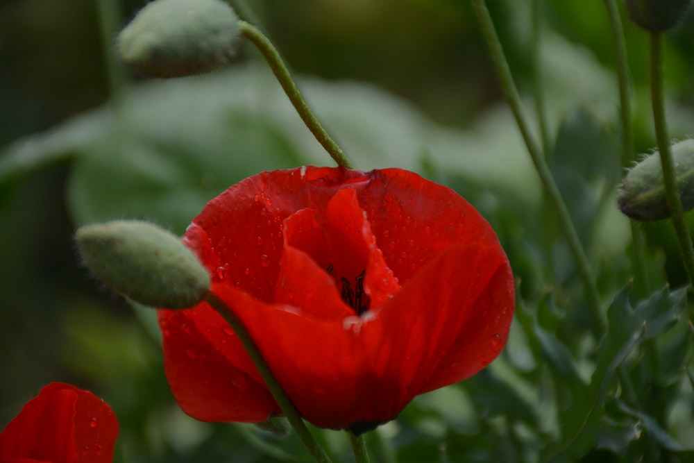 close-up photo of red petaled flower