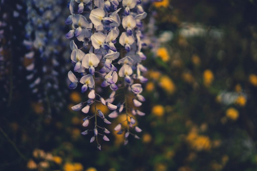 Flower Pt. 01