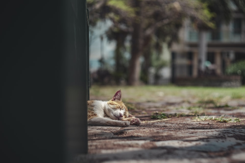 selective focus photography of cat laying on brown soil