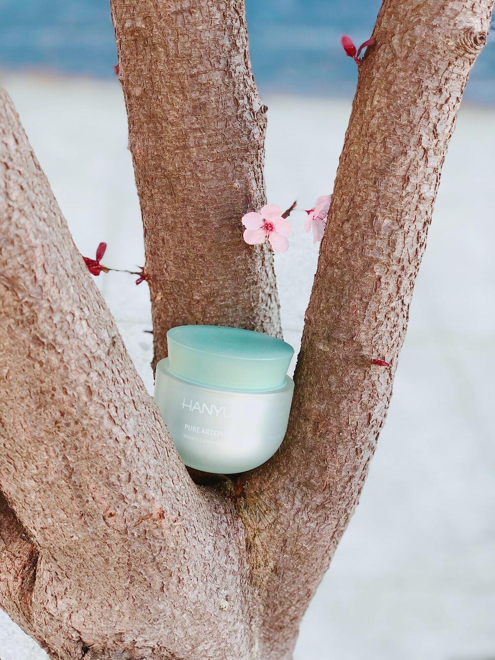 teal tub on tree branch