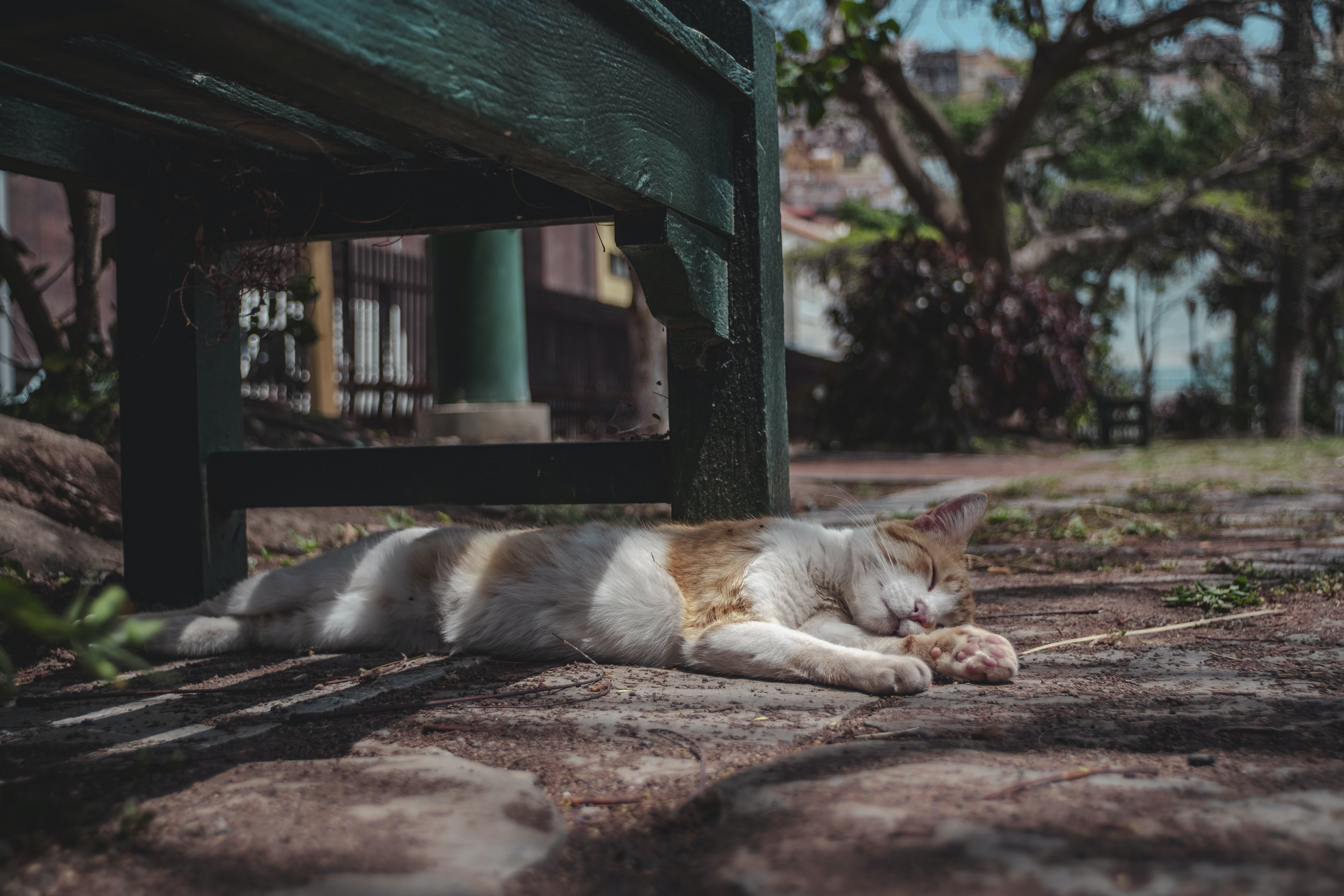 orange and white tabby cat lying on ground on focus photo