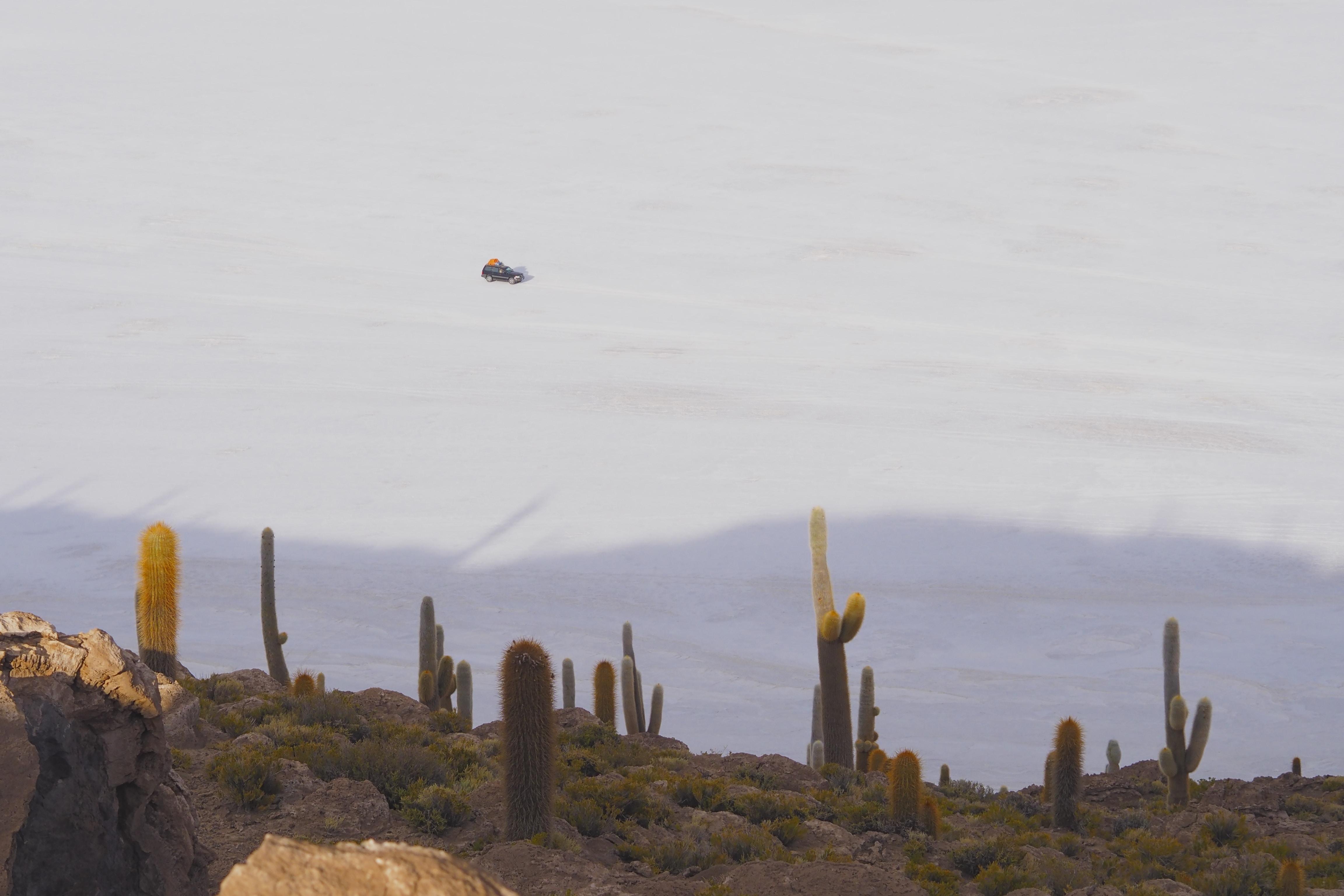 green cacti at daytime