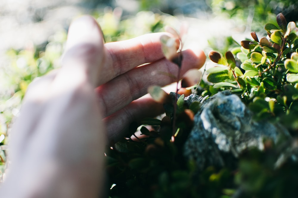 person's left hand on green leaves
