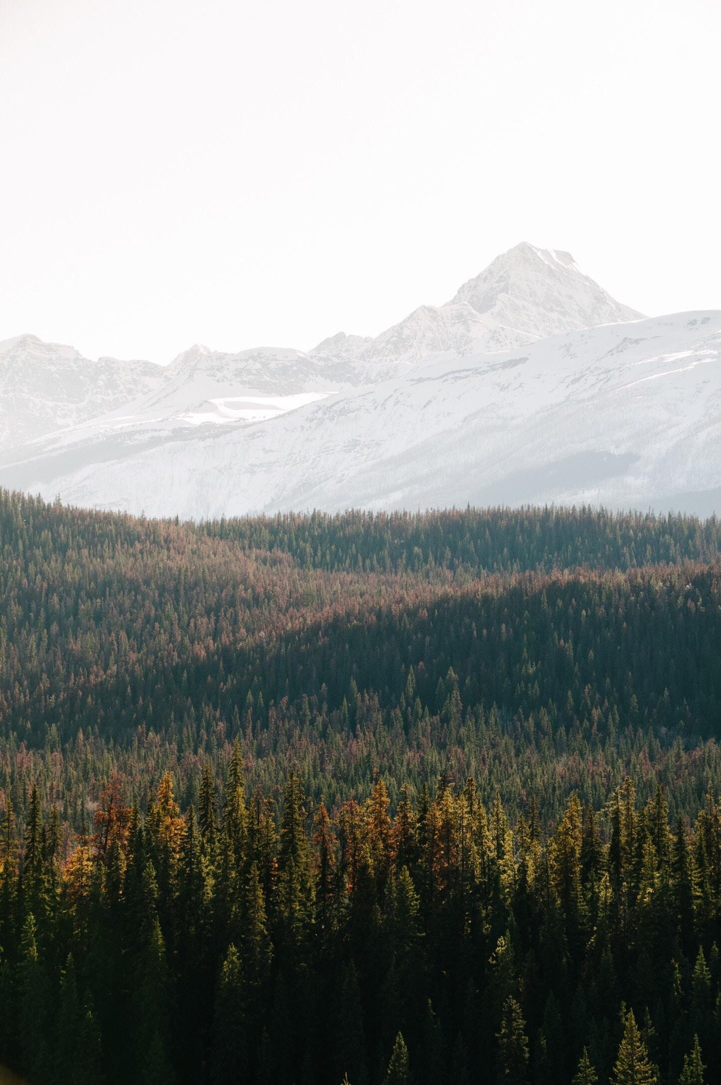 Pine Alps stories