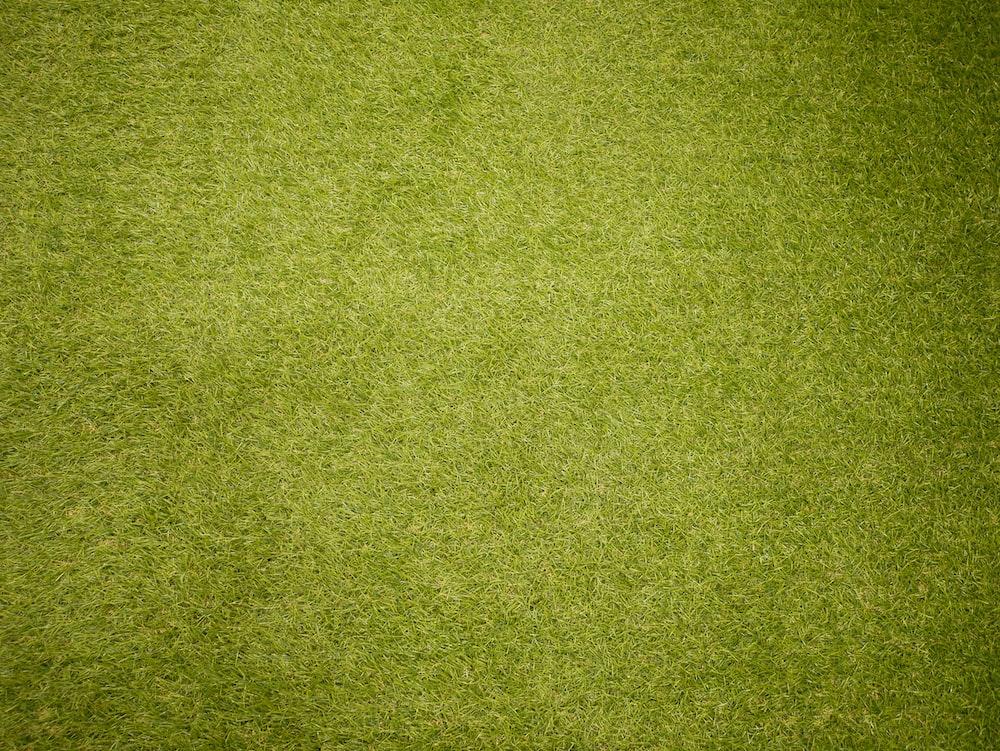 b890102c9d359d Best 20+ Grass Pictures | Download Free Images on Unsplash