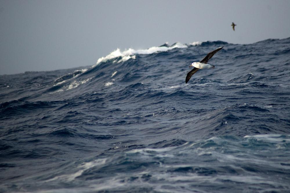 bird on flight above sea