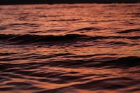 calm body of water on focus photo