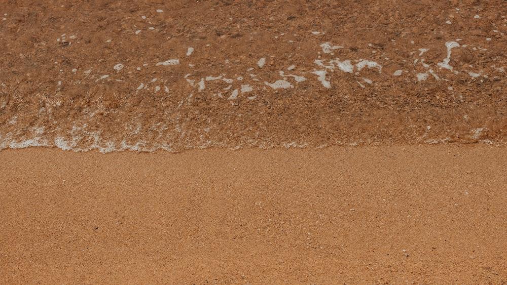 closeup photo of seashore