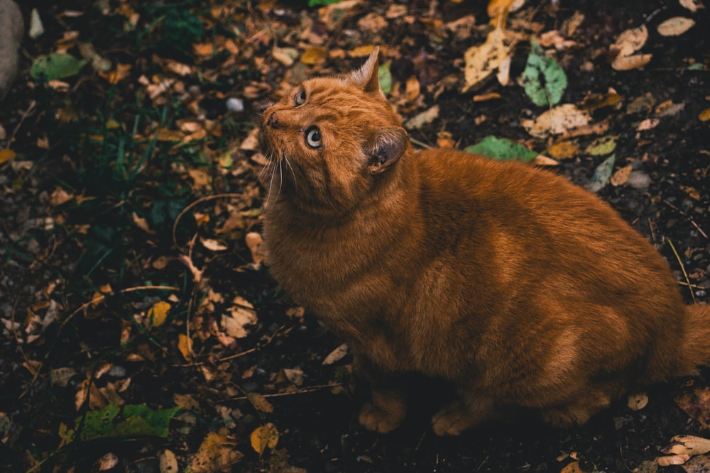 orange tabby cat on ground with fallen leaves