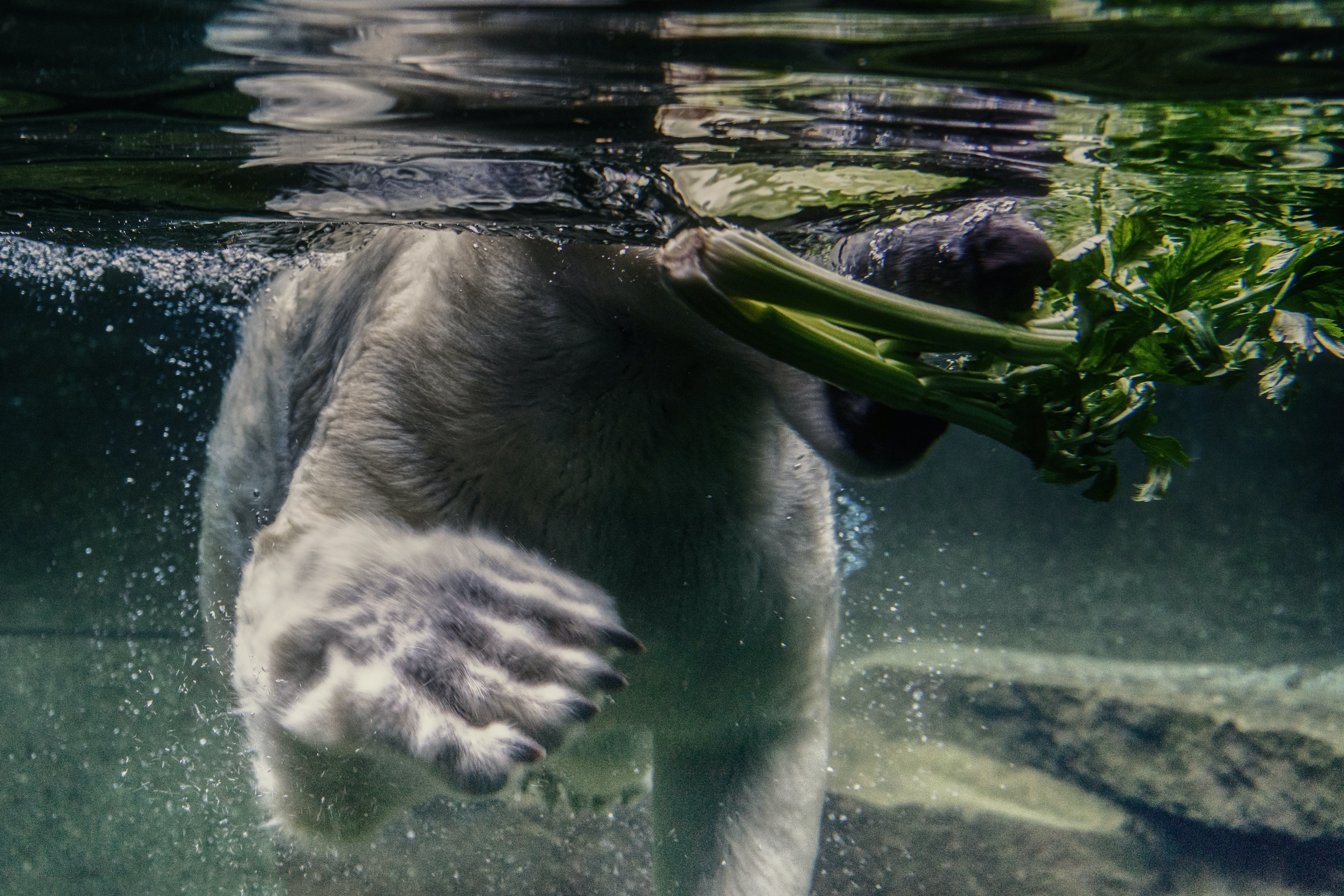 dog eating plant on water