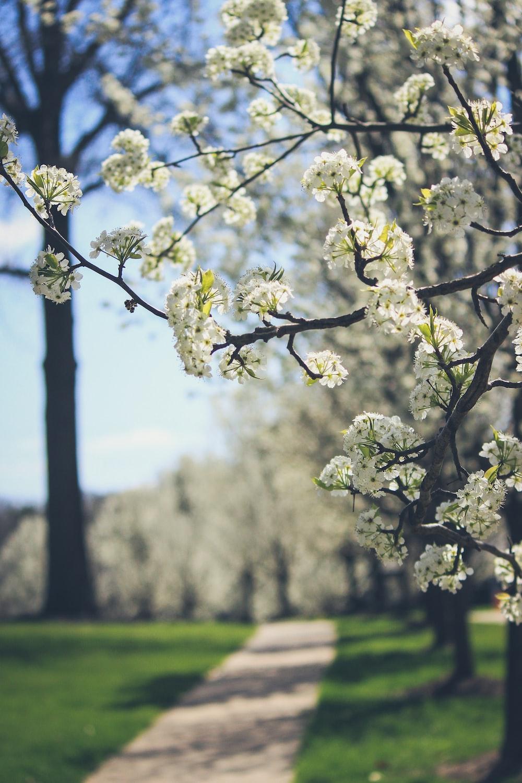macro photography of white leaf tree