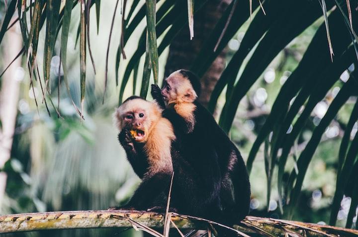 Monkey Get Off My Back