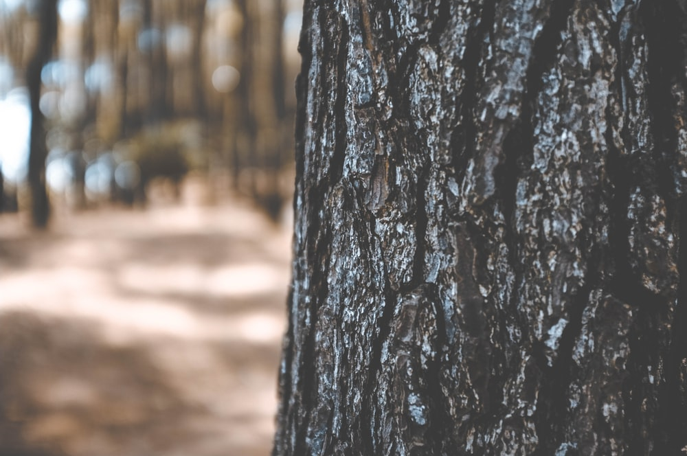selective focus photo of black trunk