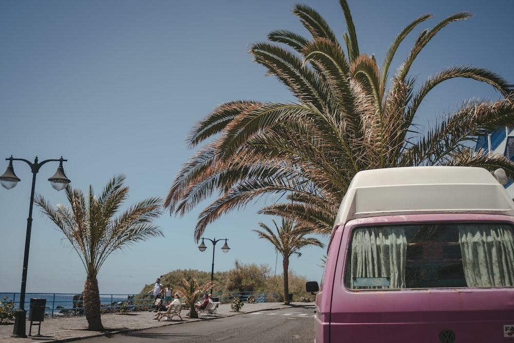 pink van near palm tree