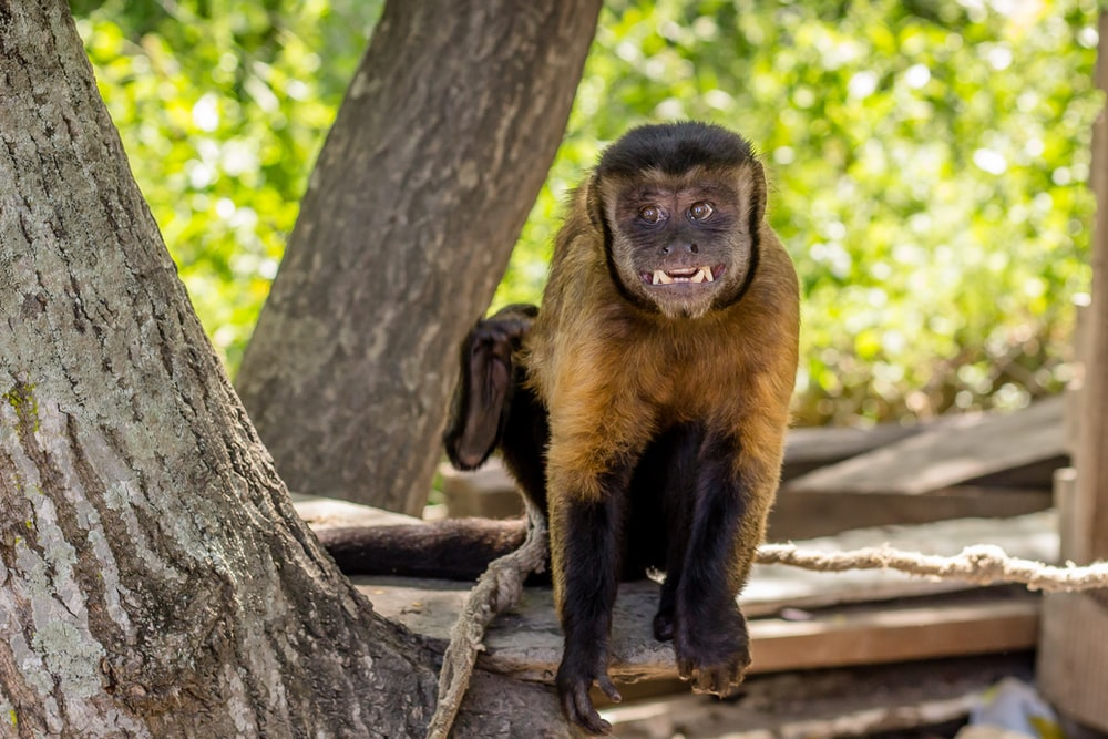 brown and black monkey on tree