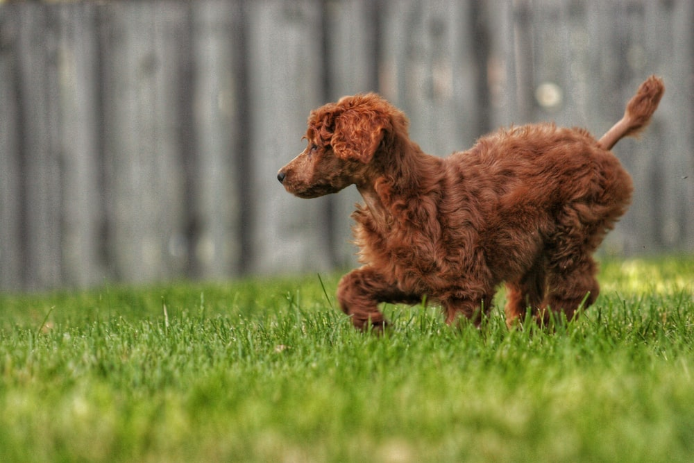 selective focus photography of dog on field