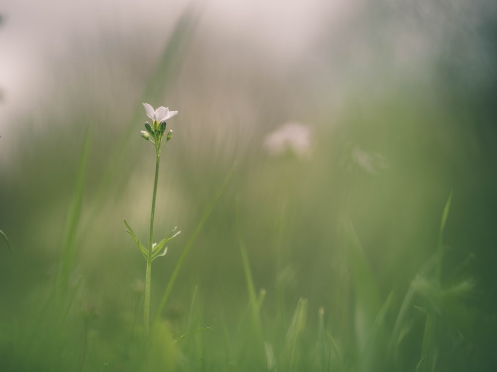 focus photography of white petaled flower