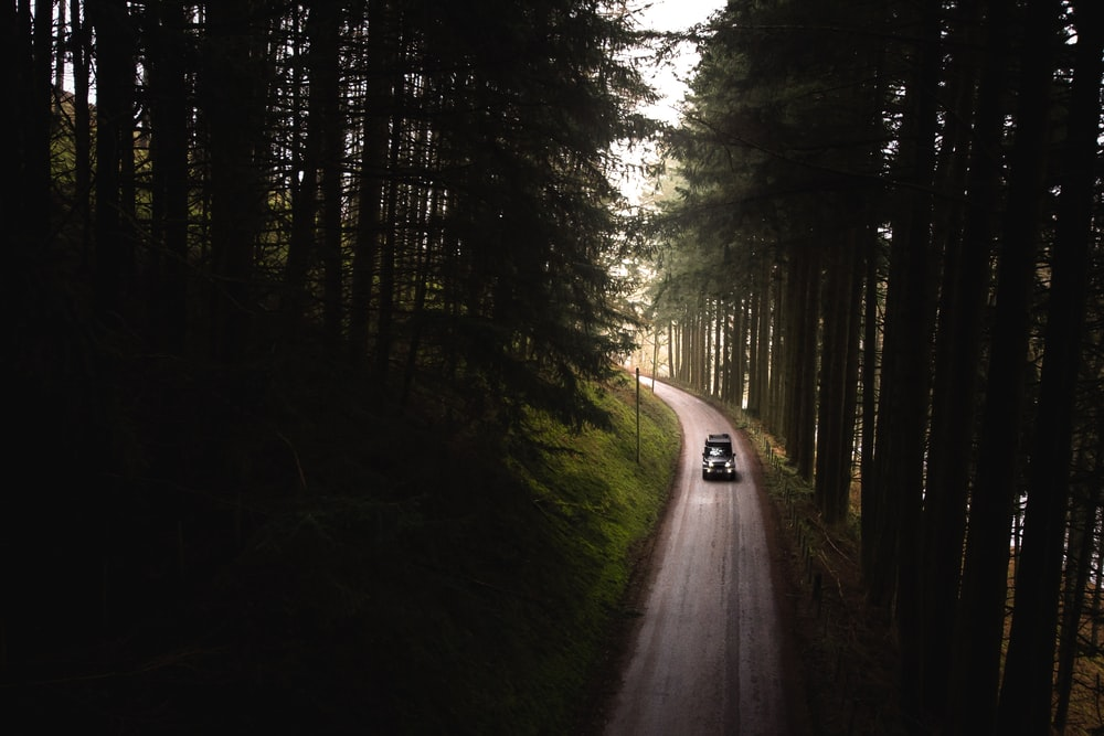 black car on road between forest