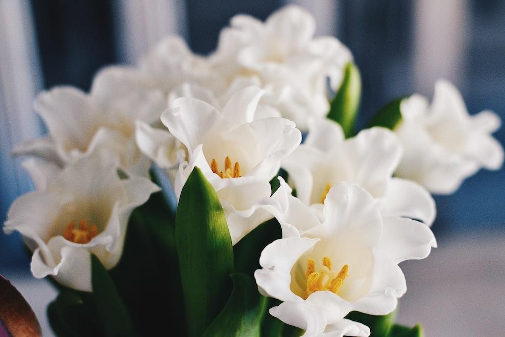macro shot photography of white flowers