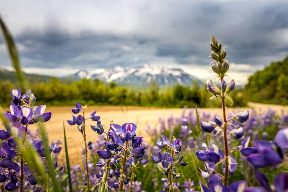 shallow focus of purple flowers