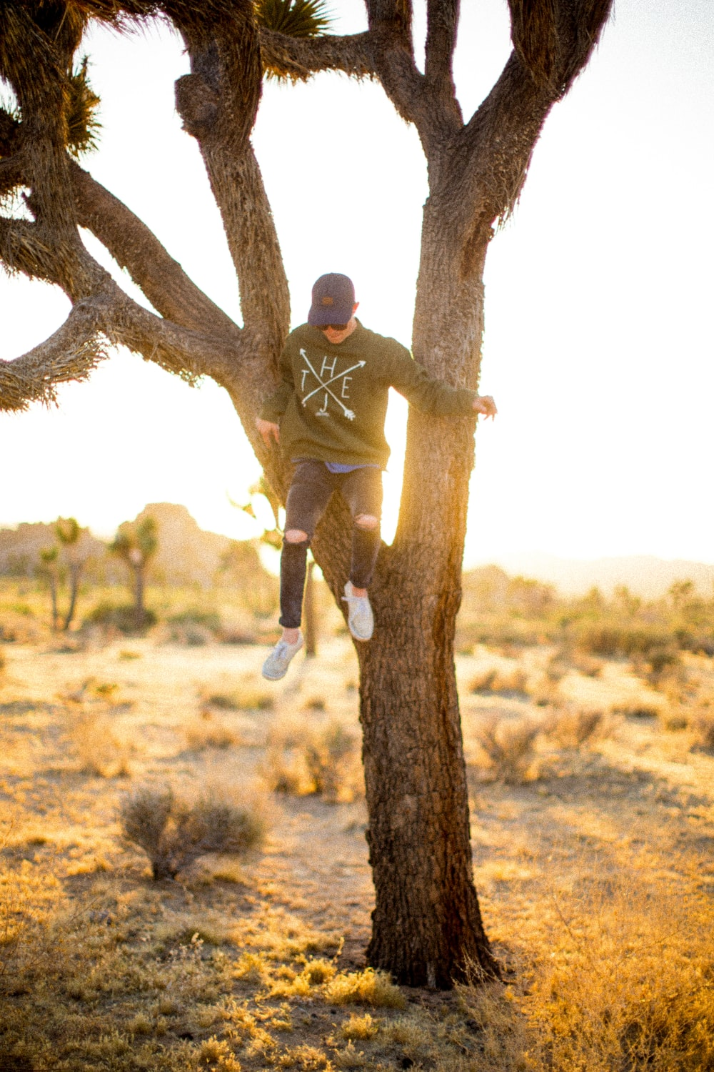 person climbing on tree