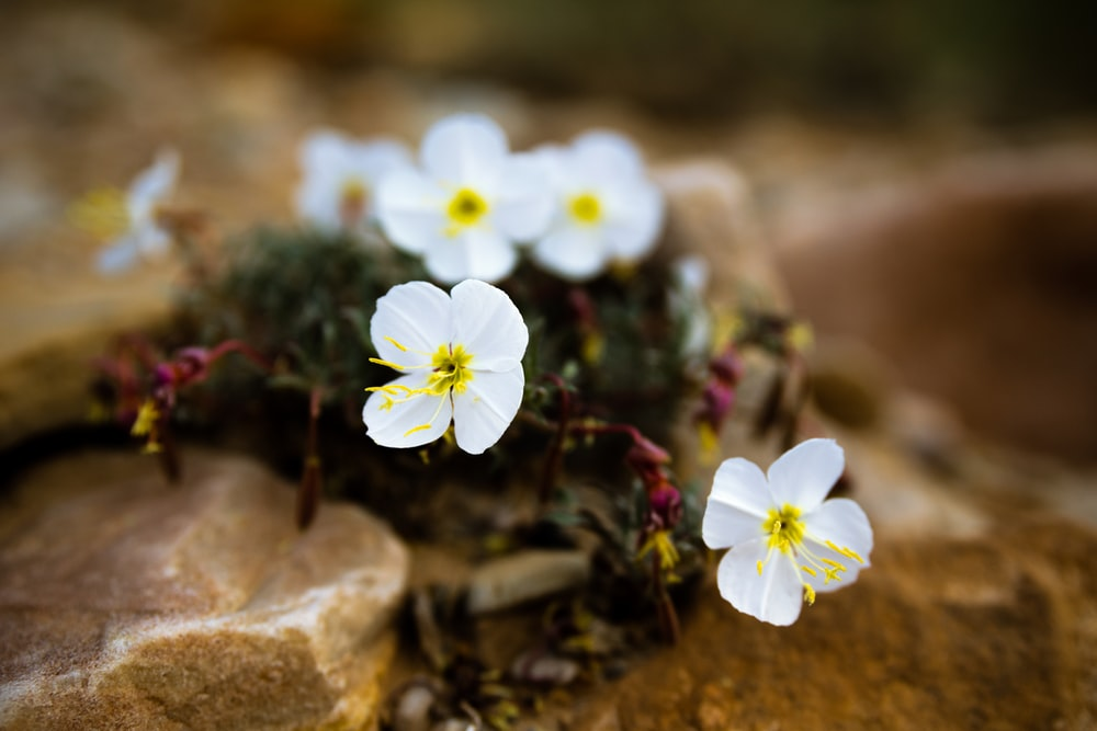 white and yellow flowers on brown rock