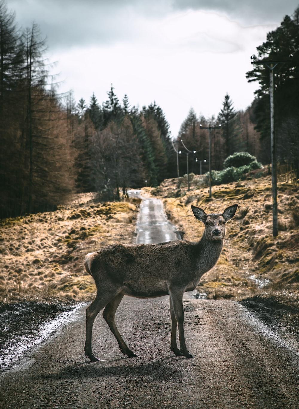 brown deer on road pathway during daytime