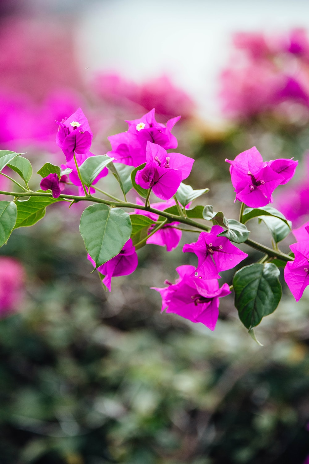 photography of petaled flower