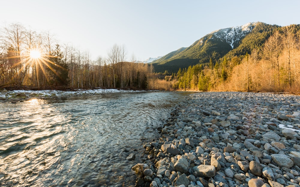 river near pine tree forest