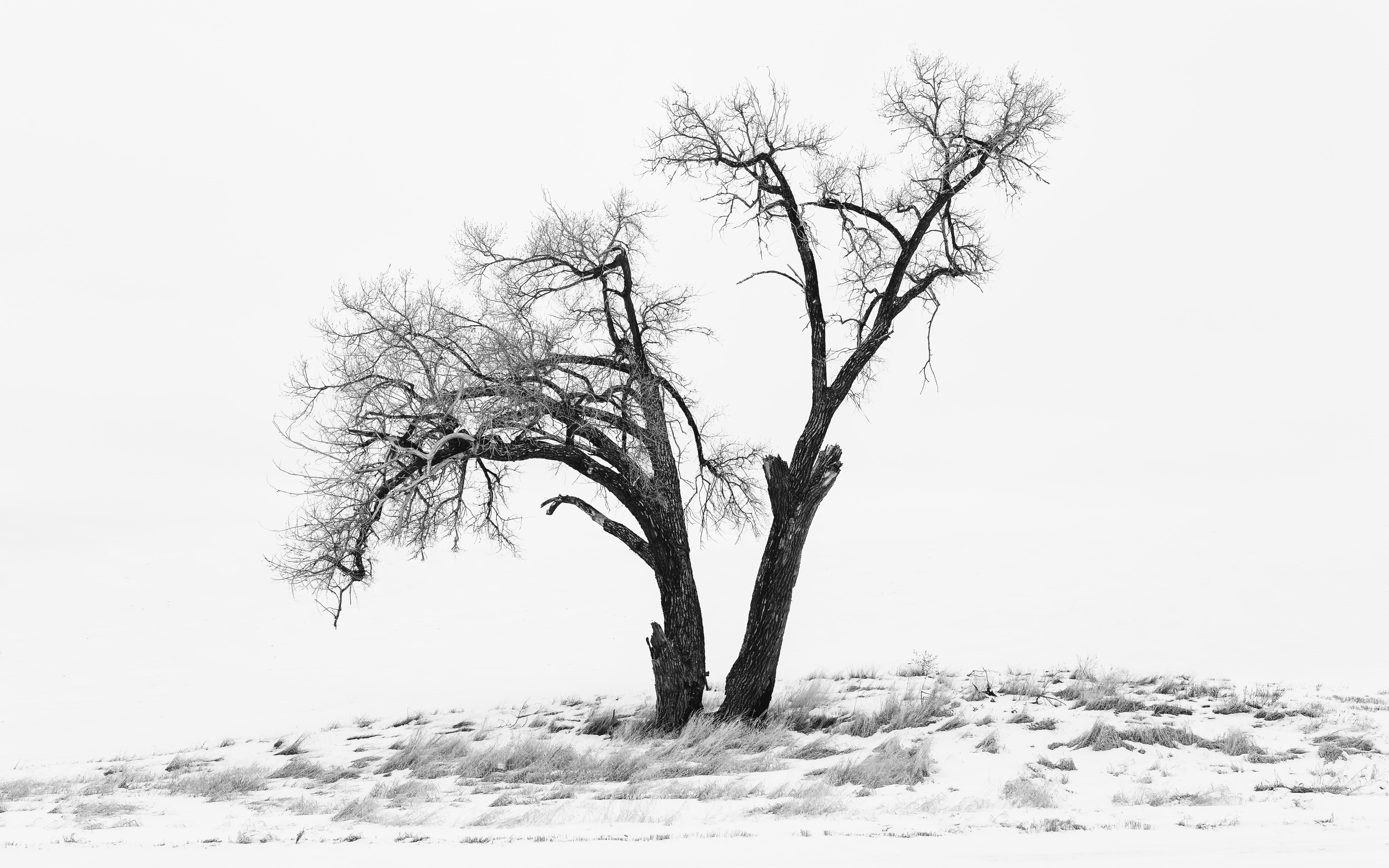 landscape photography of snow field and bare tree