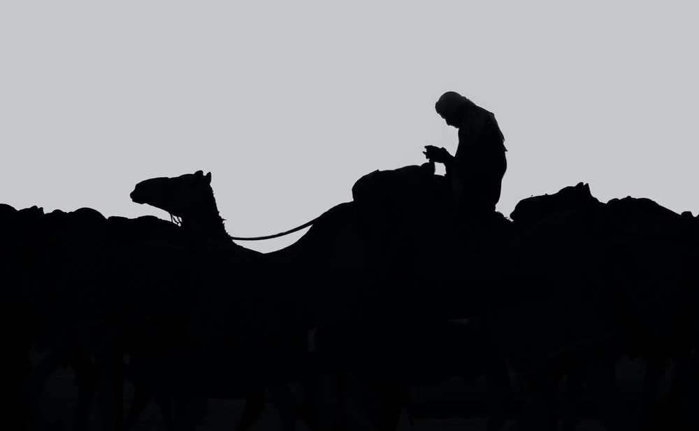 silhouette of man riding on camel