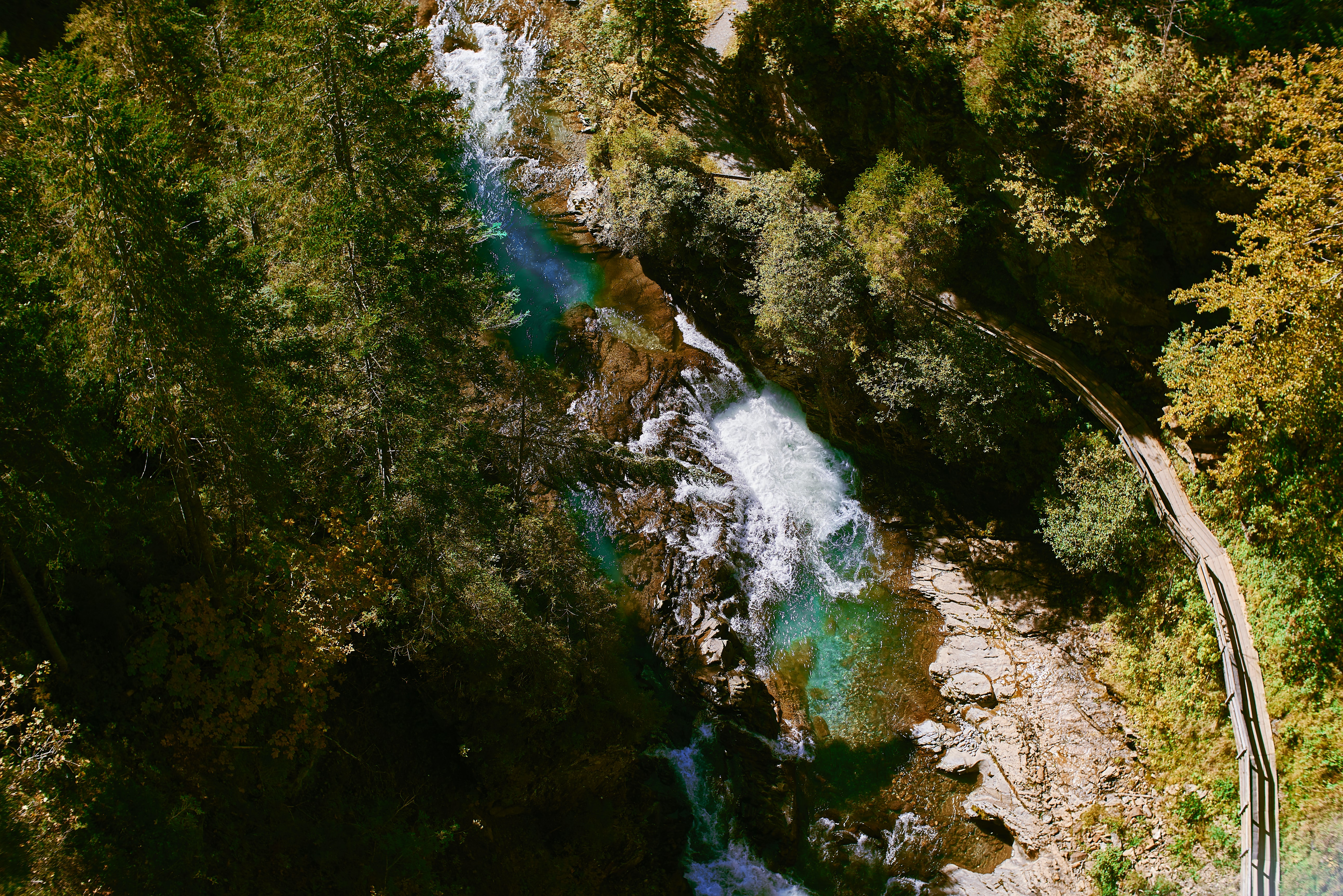 aerial photography of body of water surrounded with trees during daytime