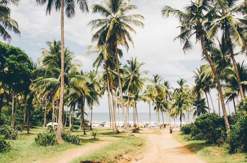 tropical trees near shore