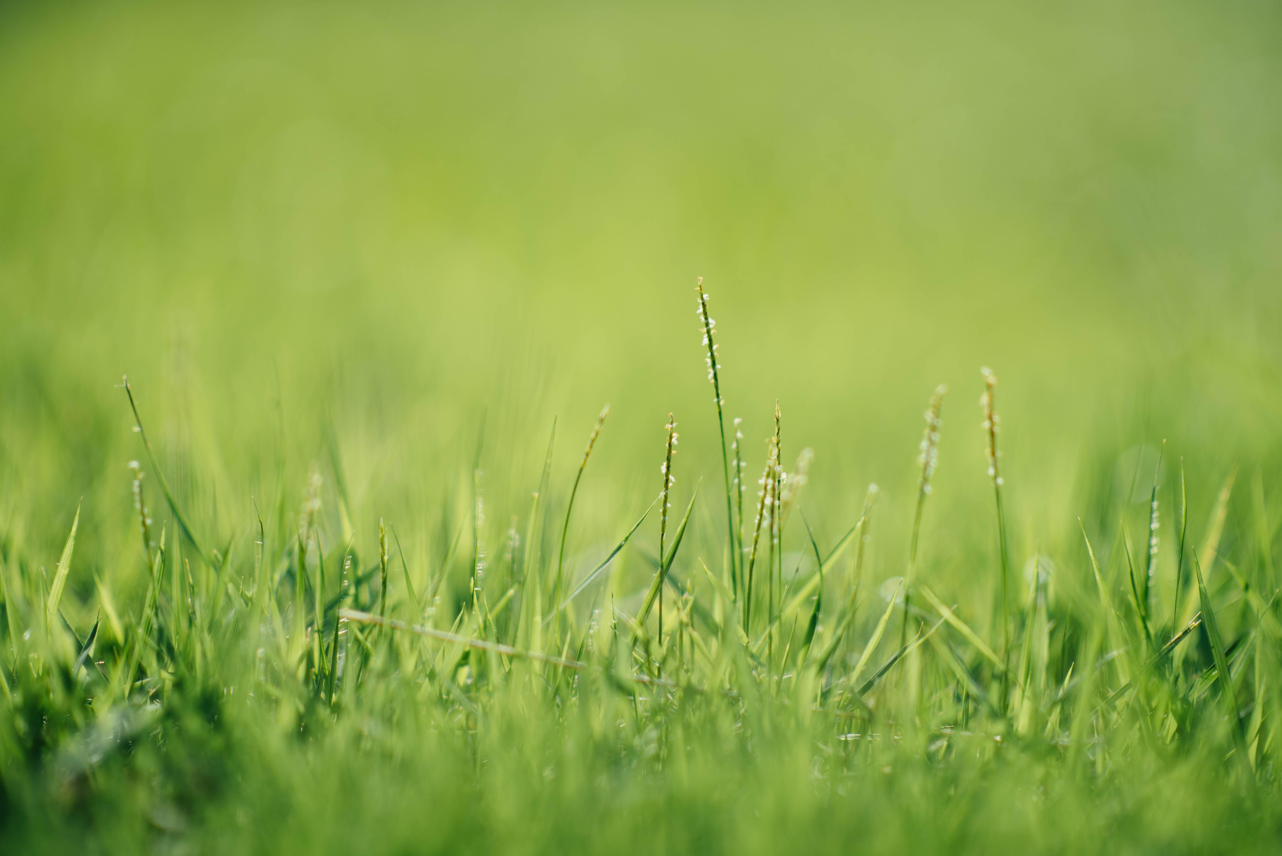 green grass closeup photography