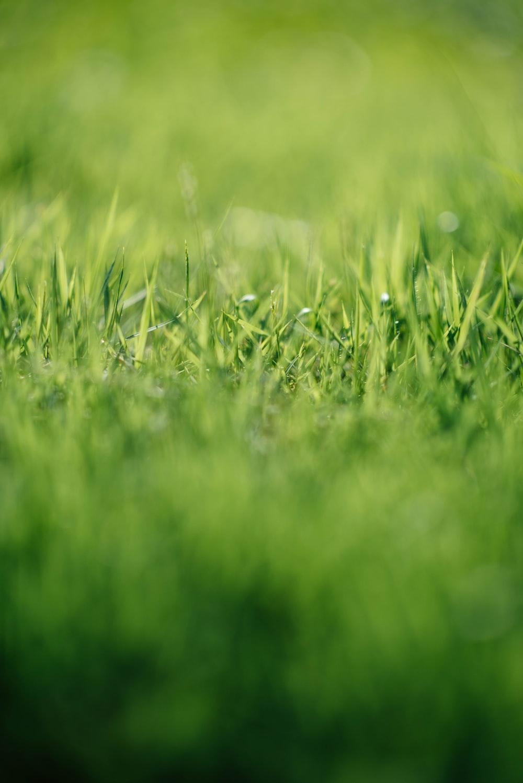 tilt-shift photography of green grass