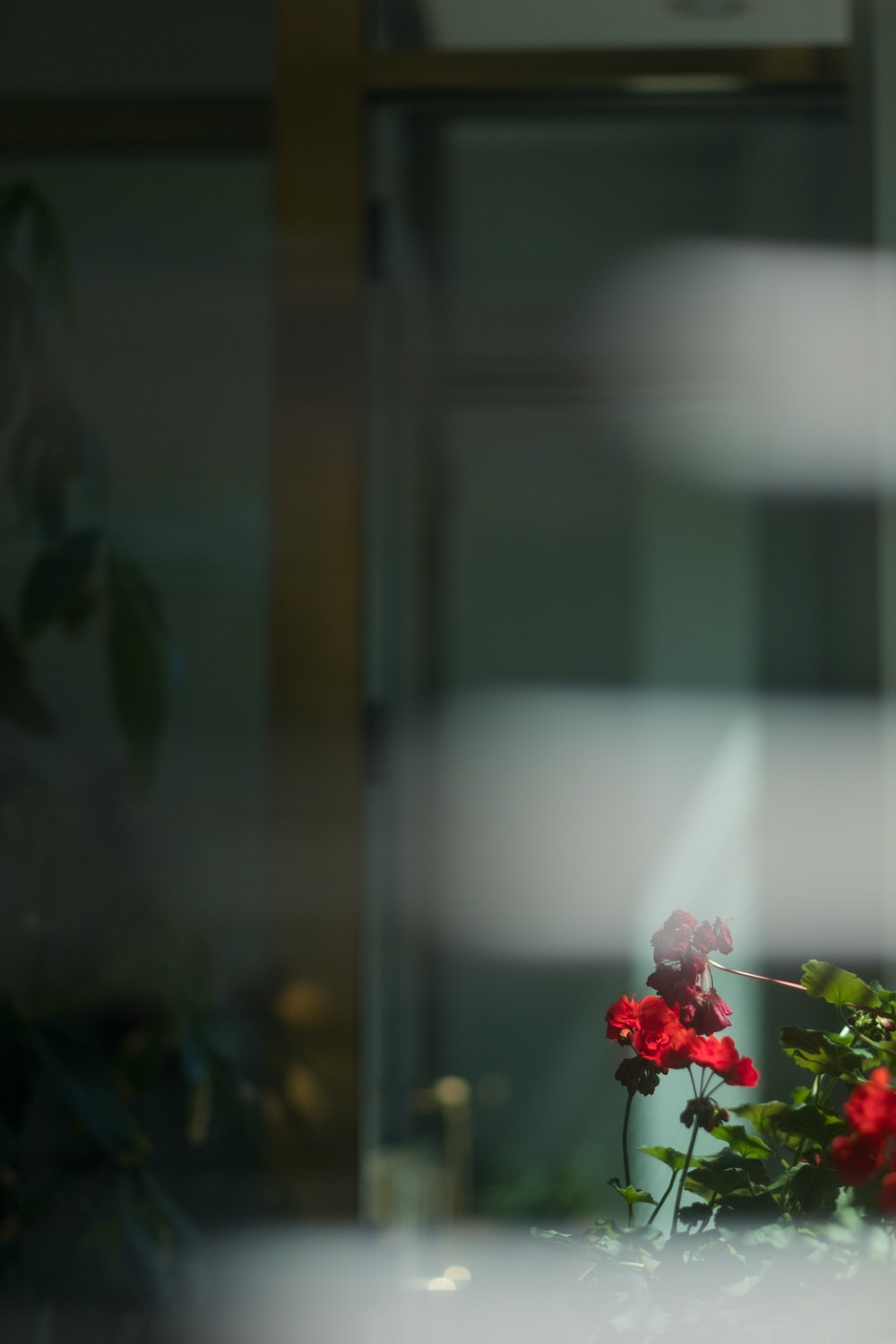 selective focus photography of red petaled flower during daytime