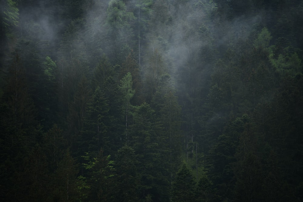 green leafed trees surround by smoke
