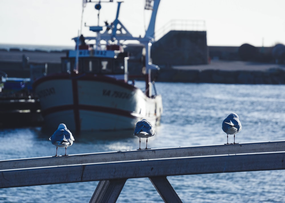 three seagull birds on post viewing boat