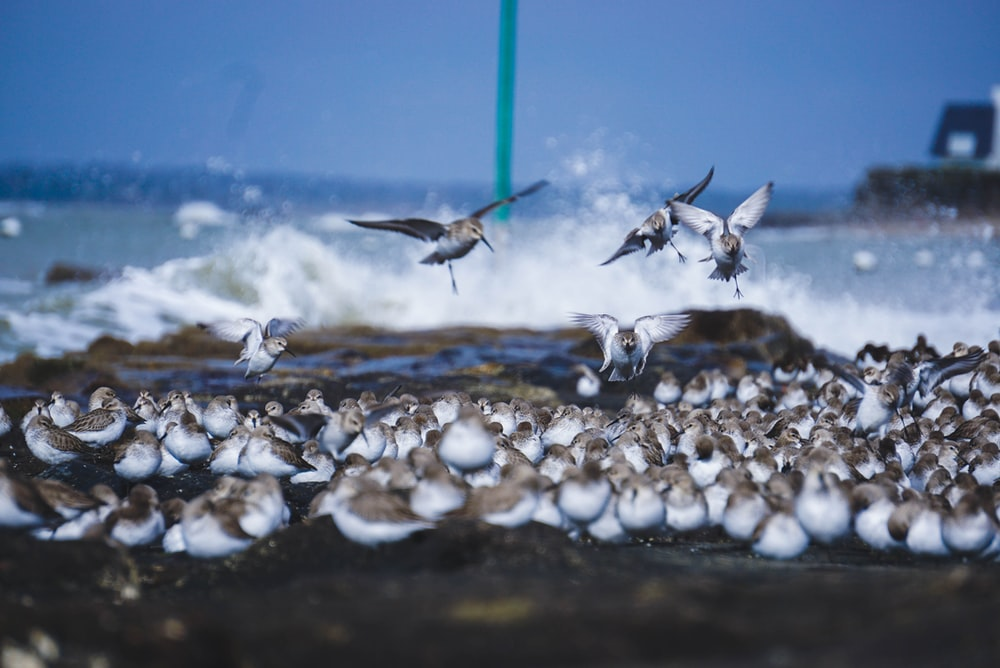 three white birds near ocean