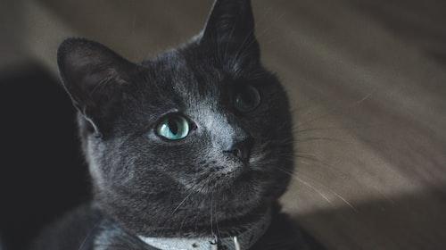 My Cat Ernie