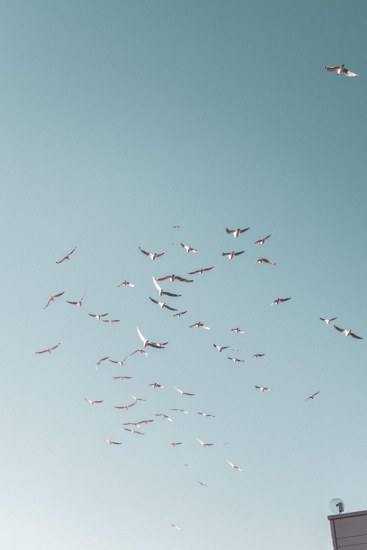 white birds flying