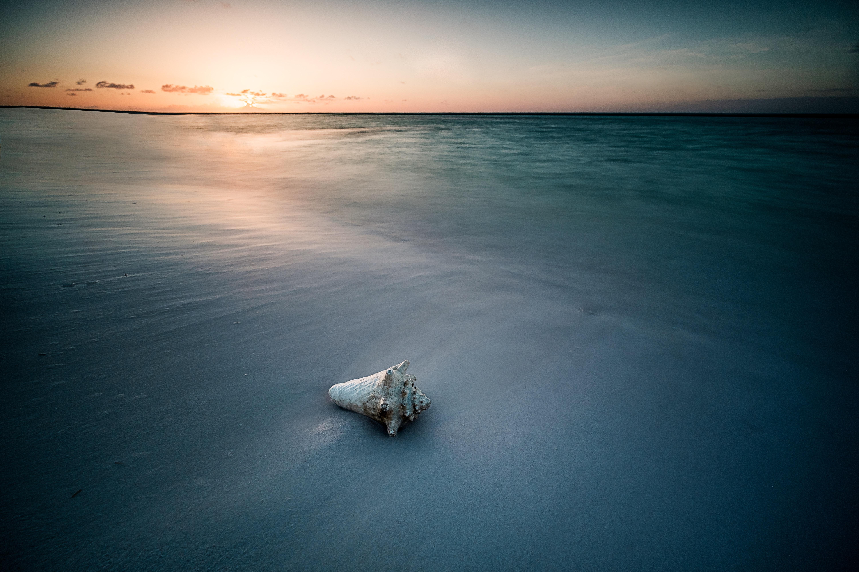 seashell on seashore