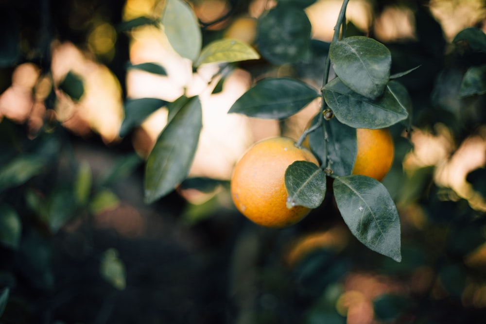 selective focus photo of round orange fruits