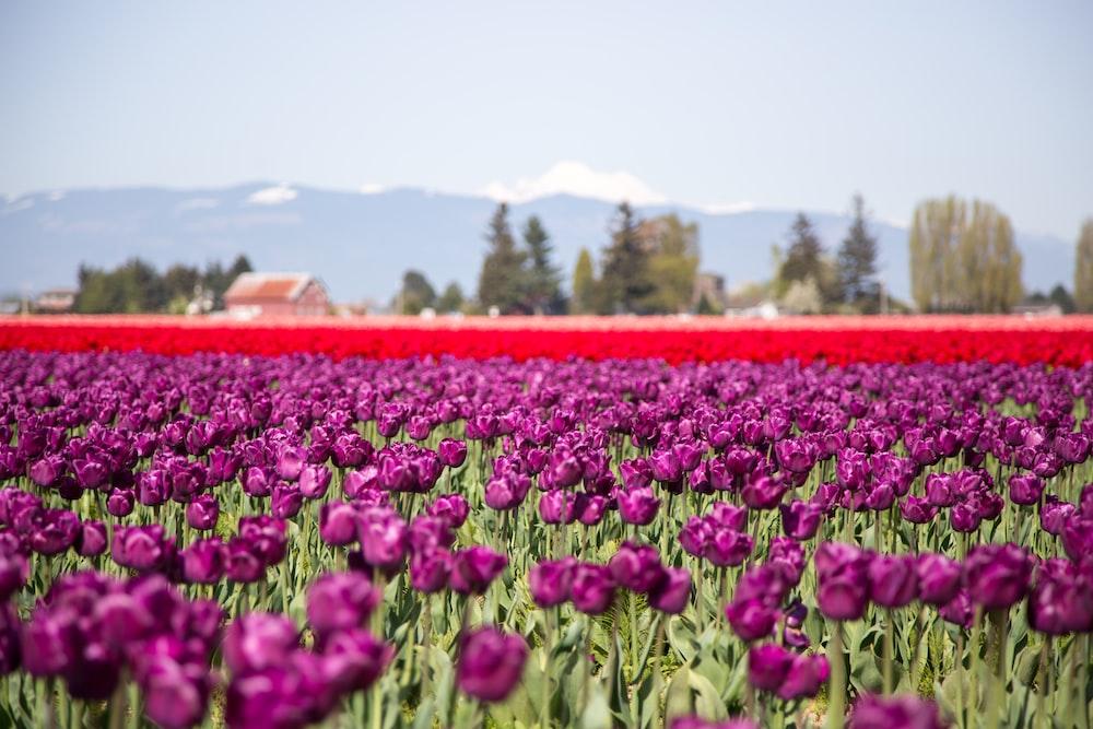 red flowering plant garden