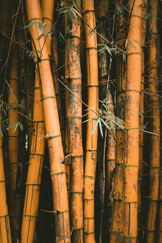 closeup photo of bamboos