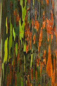 green, orange, and black abstract painting
