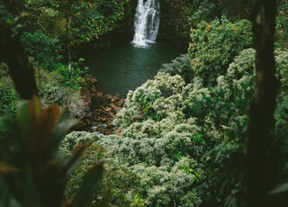 time lapse photography of waterfalls surrounded with trees