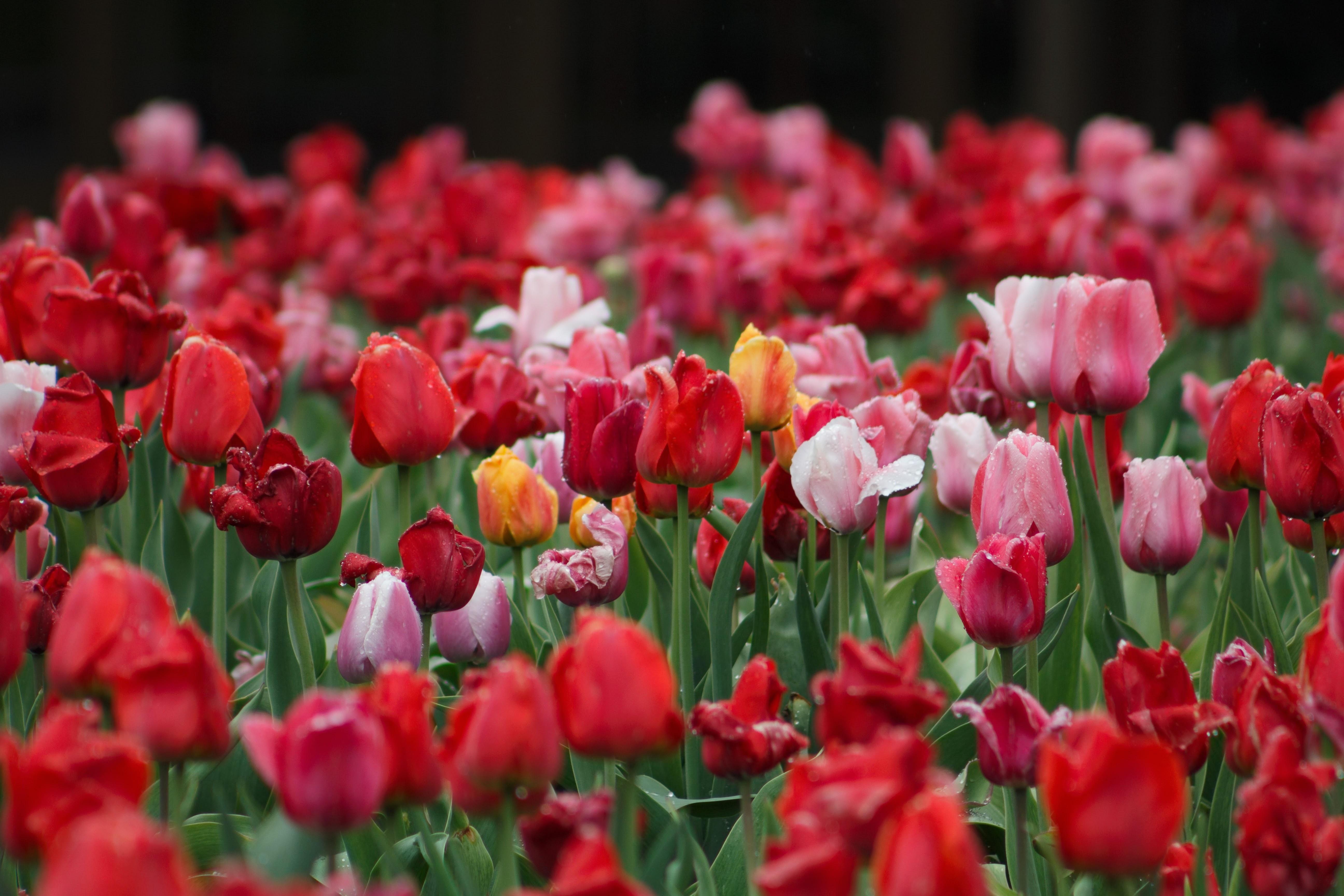 pink flower plants